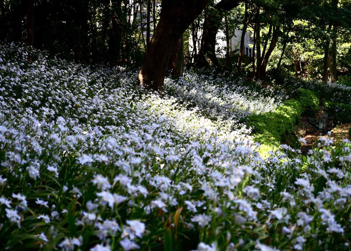 © Kiyosumi Garden, Spring in Kiyosumi Garden