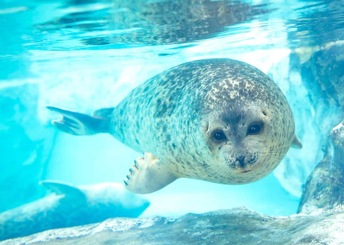 ©  Osaka Aquarium Kaiyukan