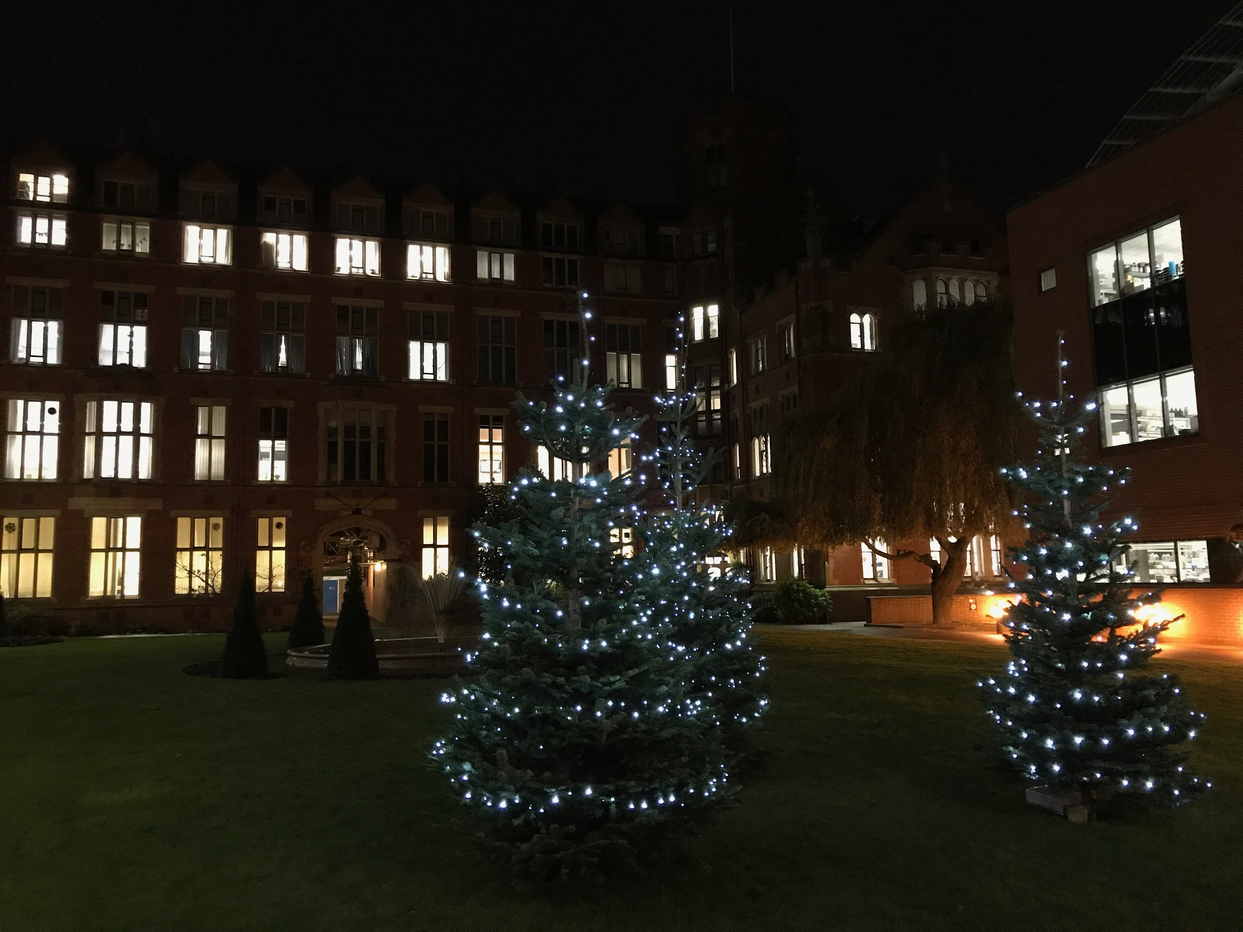 Christmas trees in Firth Court