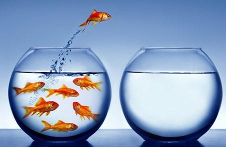 Fish jumping v2.jpg
