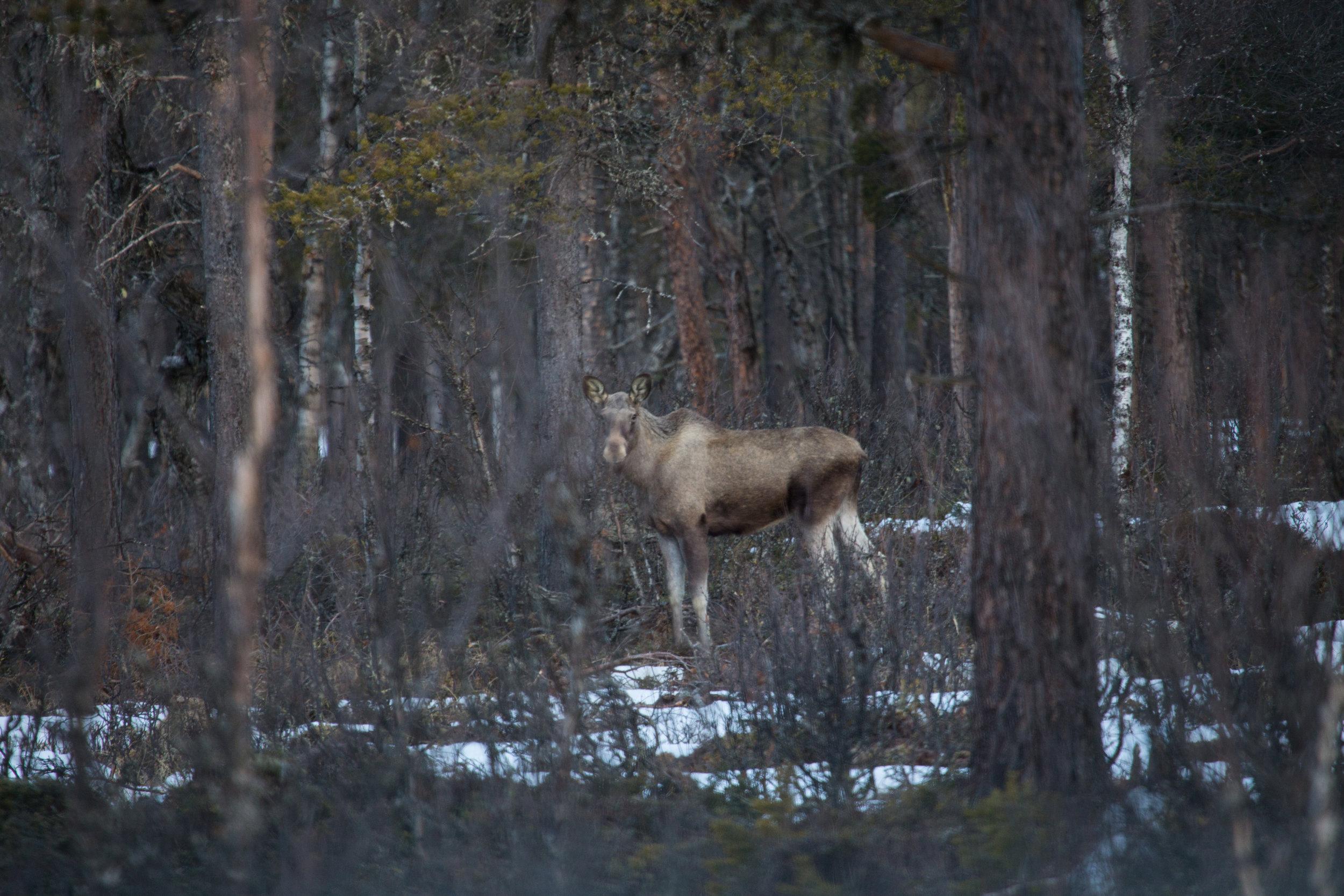 Foto: Finn Audun Grøndahl