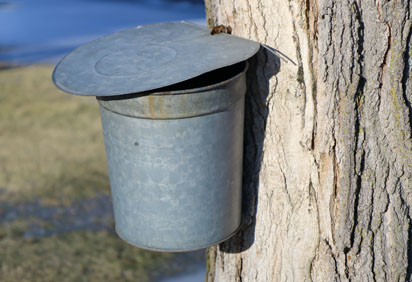 maple bucket 1.jpg