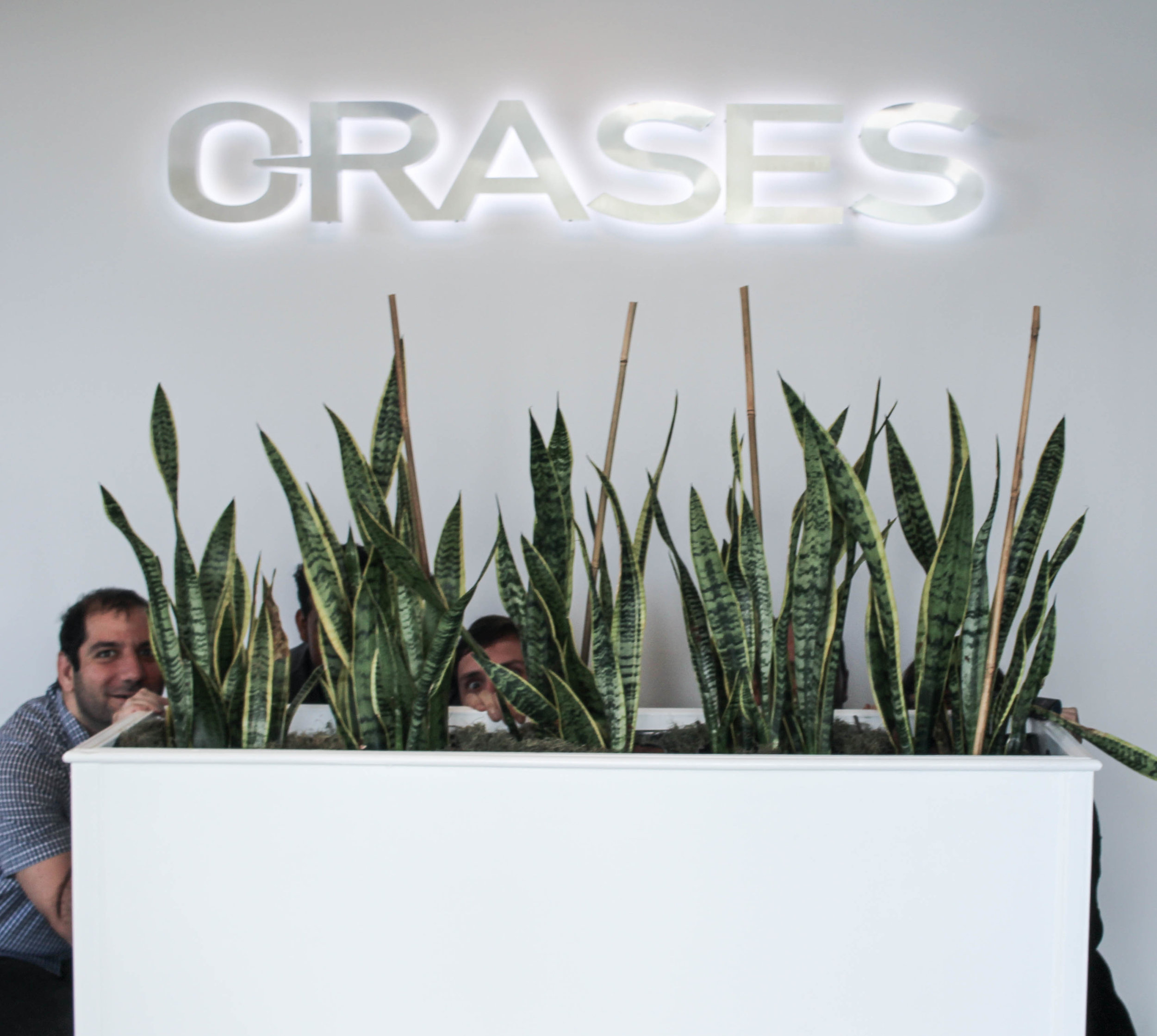 Orases