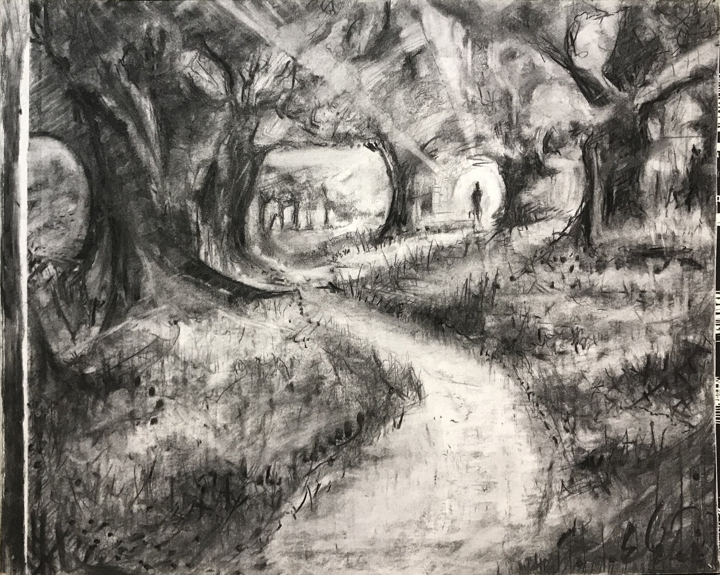 Forest, charcoal on paper, 2014