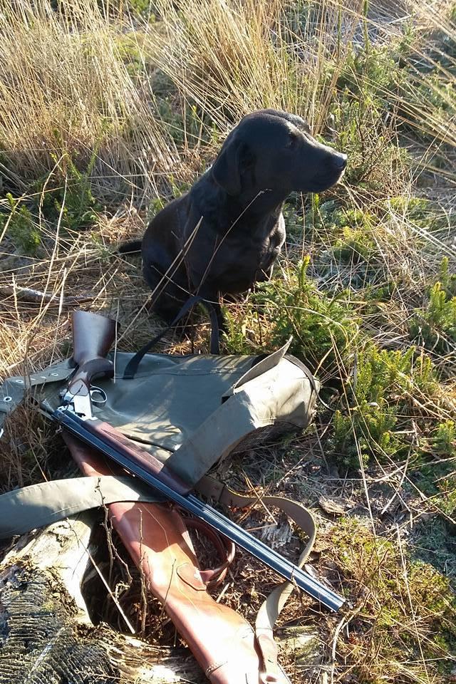 Kennel Huntsman's Choice Sort Labrador Jagt sydsjælland