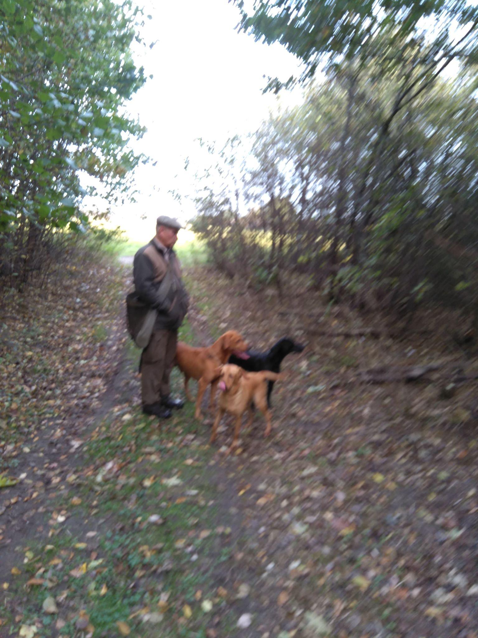 Hunde Labrador Jagt sydsjælland hvalpe næstved jagt