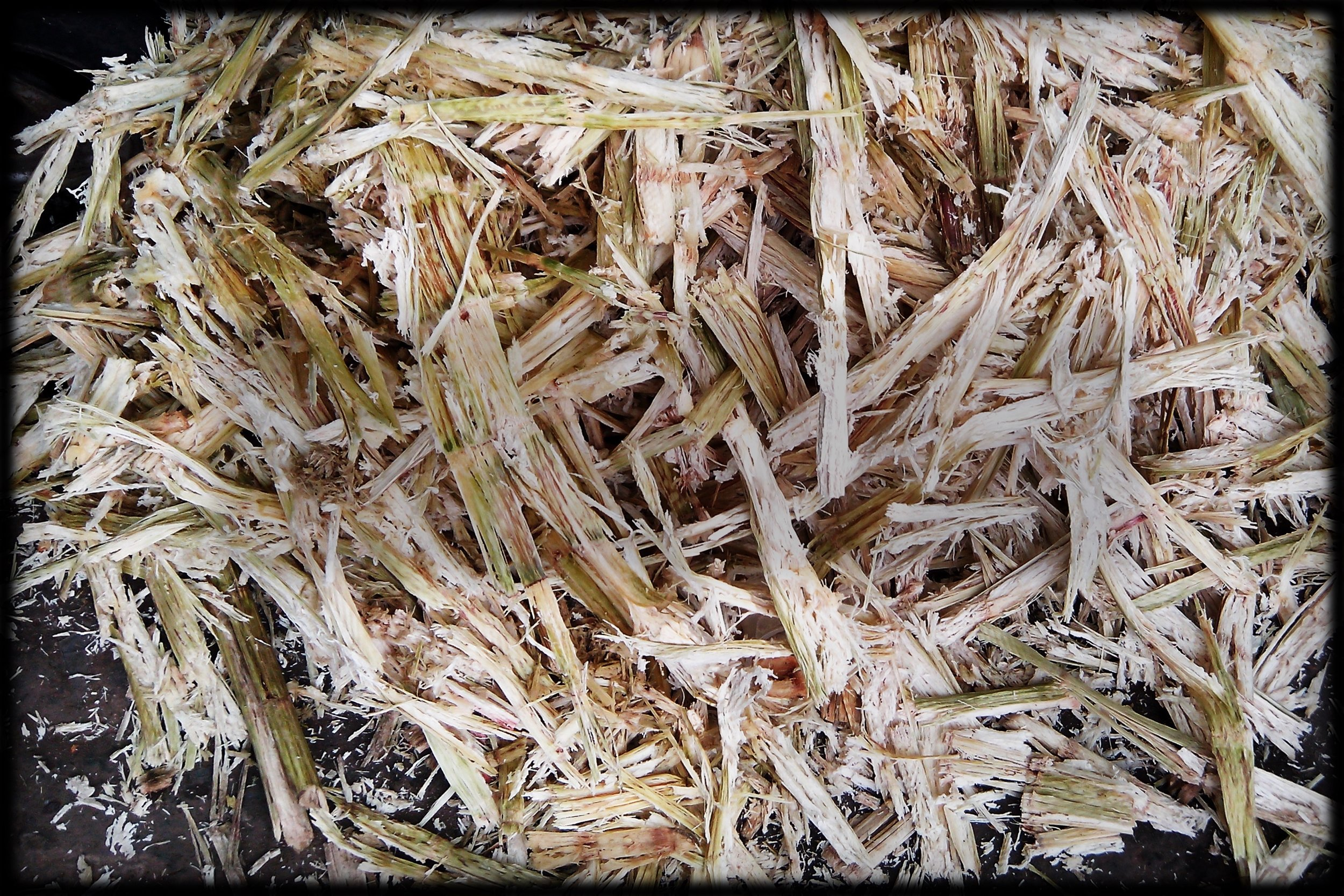 TRANSFORM WASTE TO A VALUABLE PRODUCT - Several industries can now make a profit from their unused resources.Both bagasse (crushed sugar canes) and other plants can be used as rawmaterial for NextFuel. Surplus products are converted into valuable fuel.