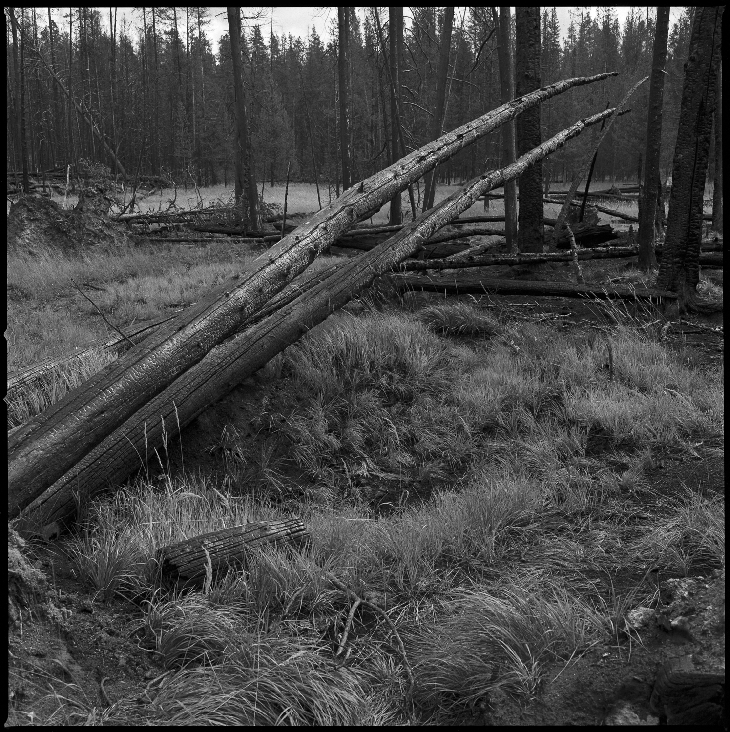 Yellowstone after the Fire 1989