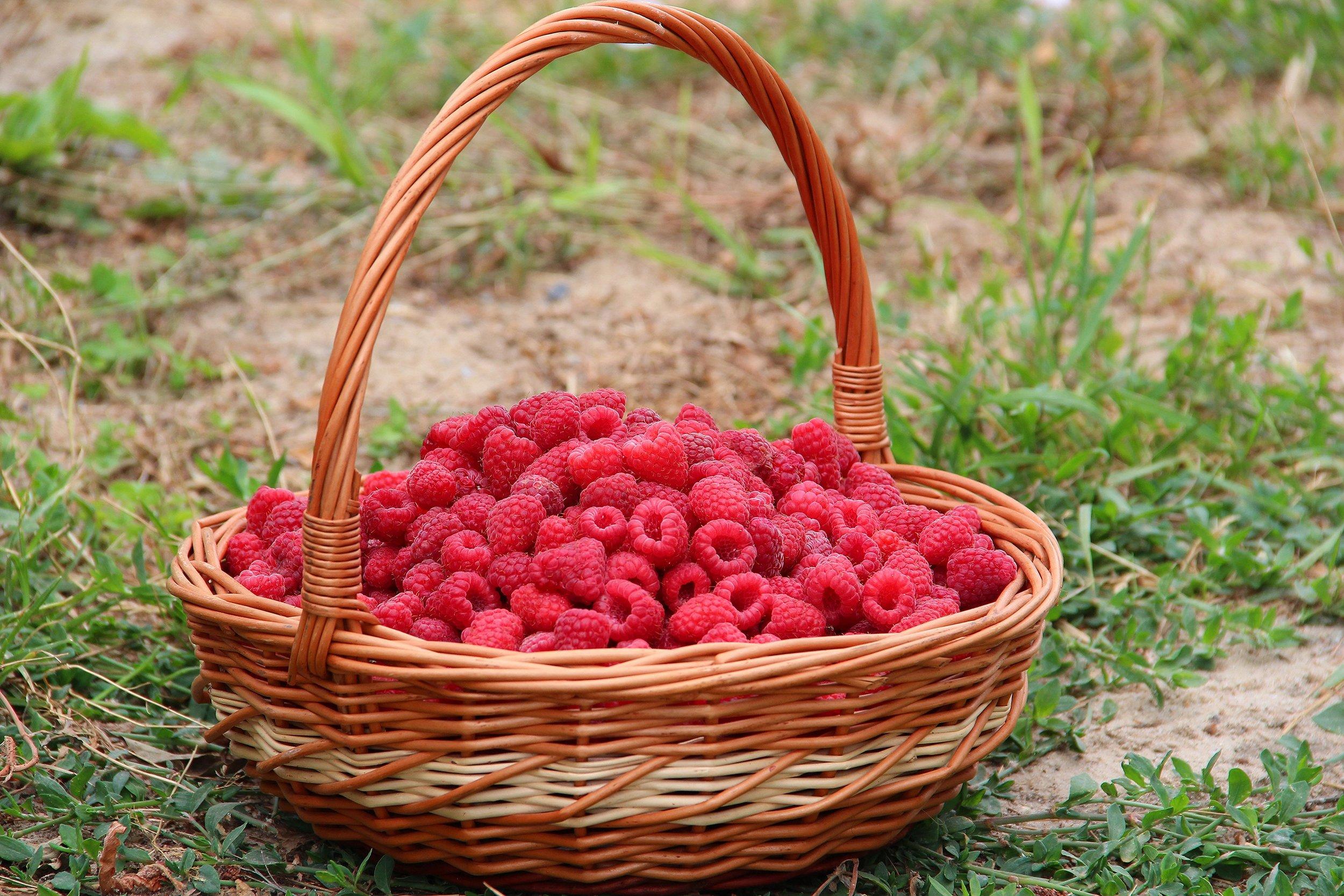 New York State berries local foods raspberries