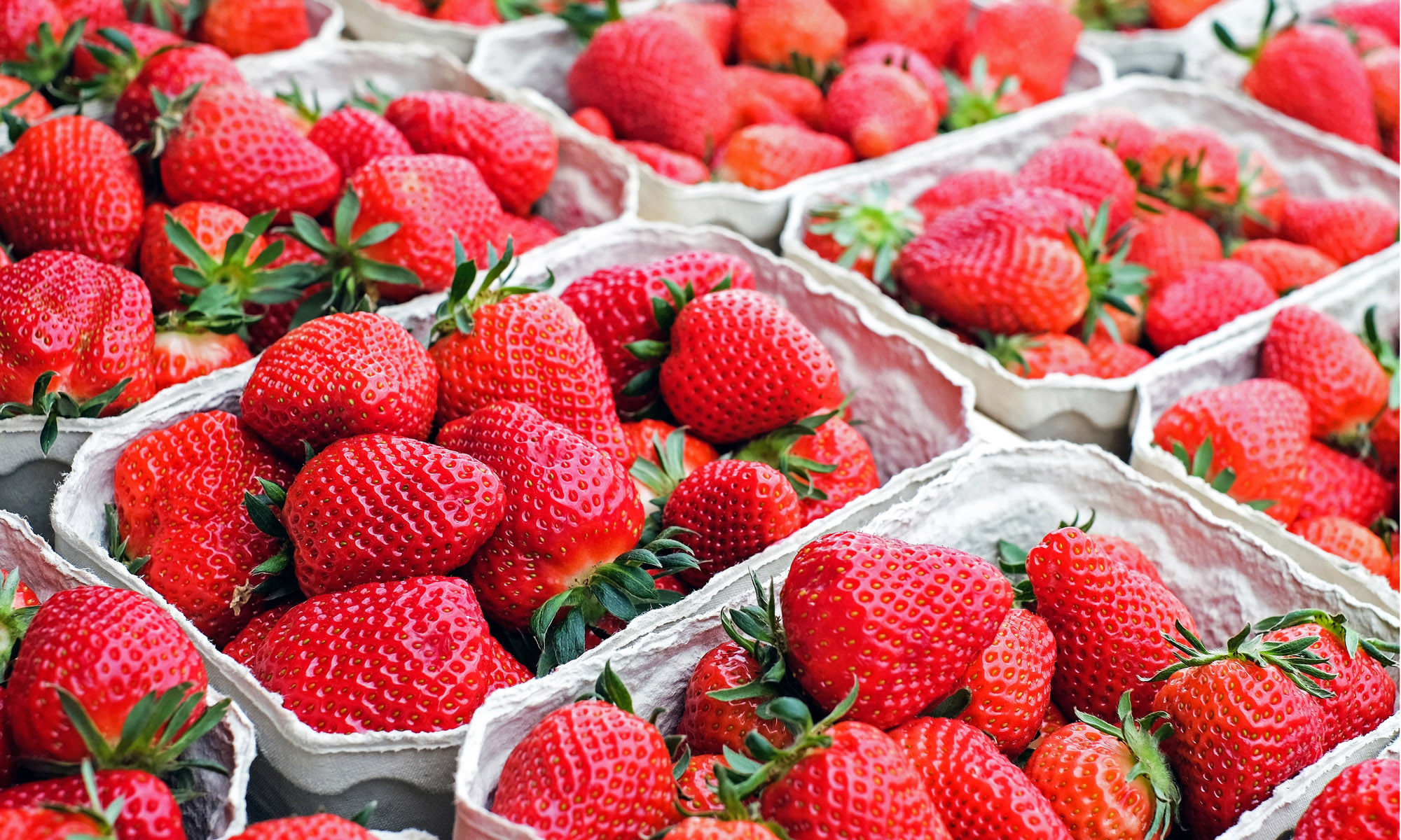 Strawberries Show Promise - As a Potent Weapon against Oral Cancer