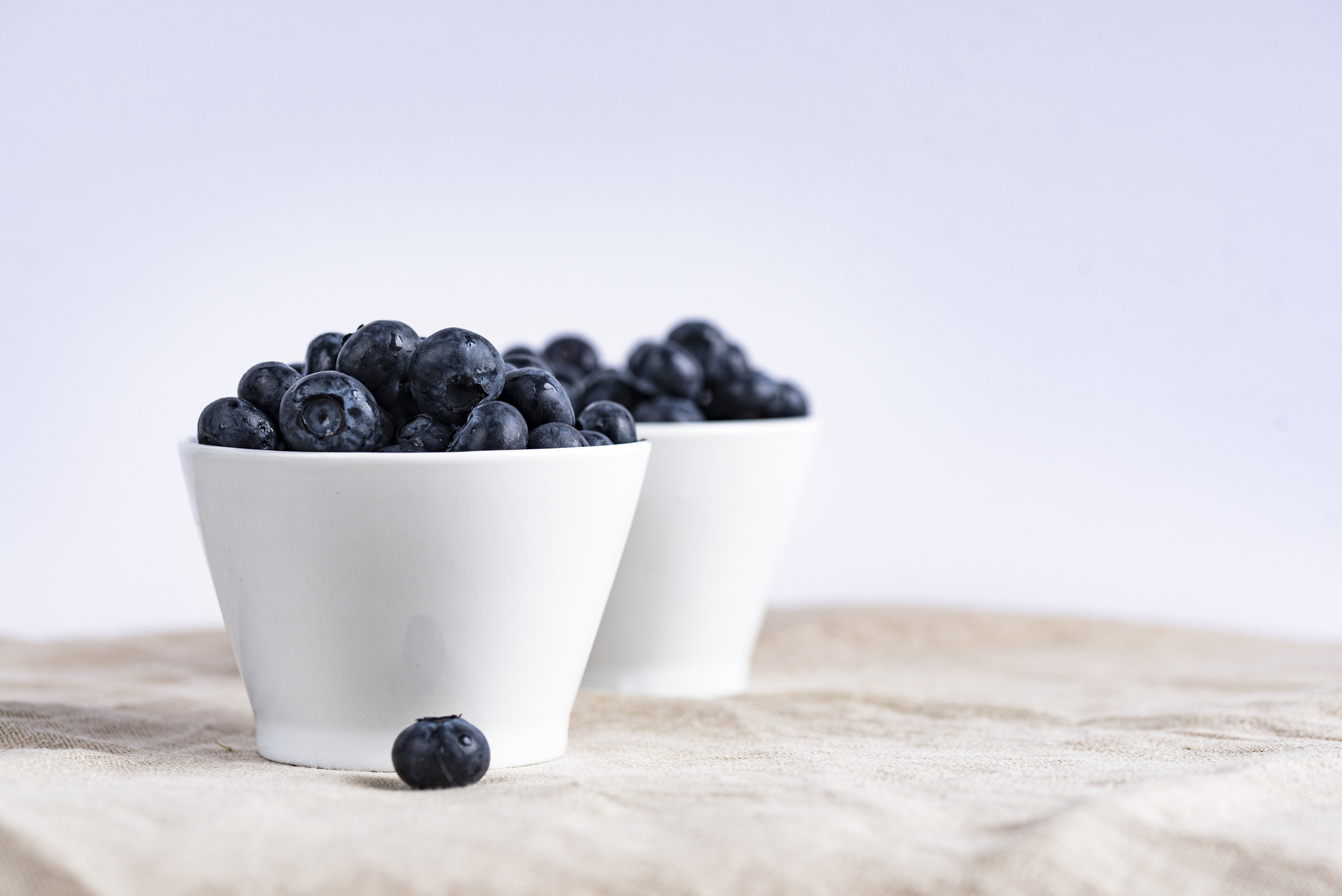 new-york-state-berry-growers-association-blueberry-growing-workshop