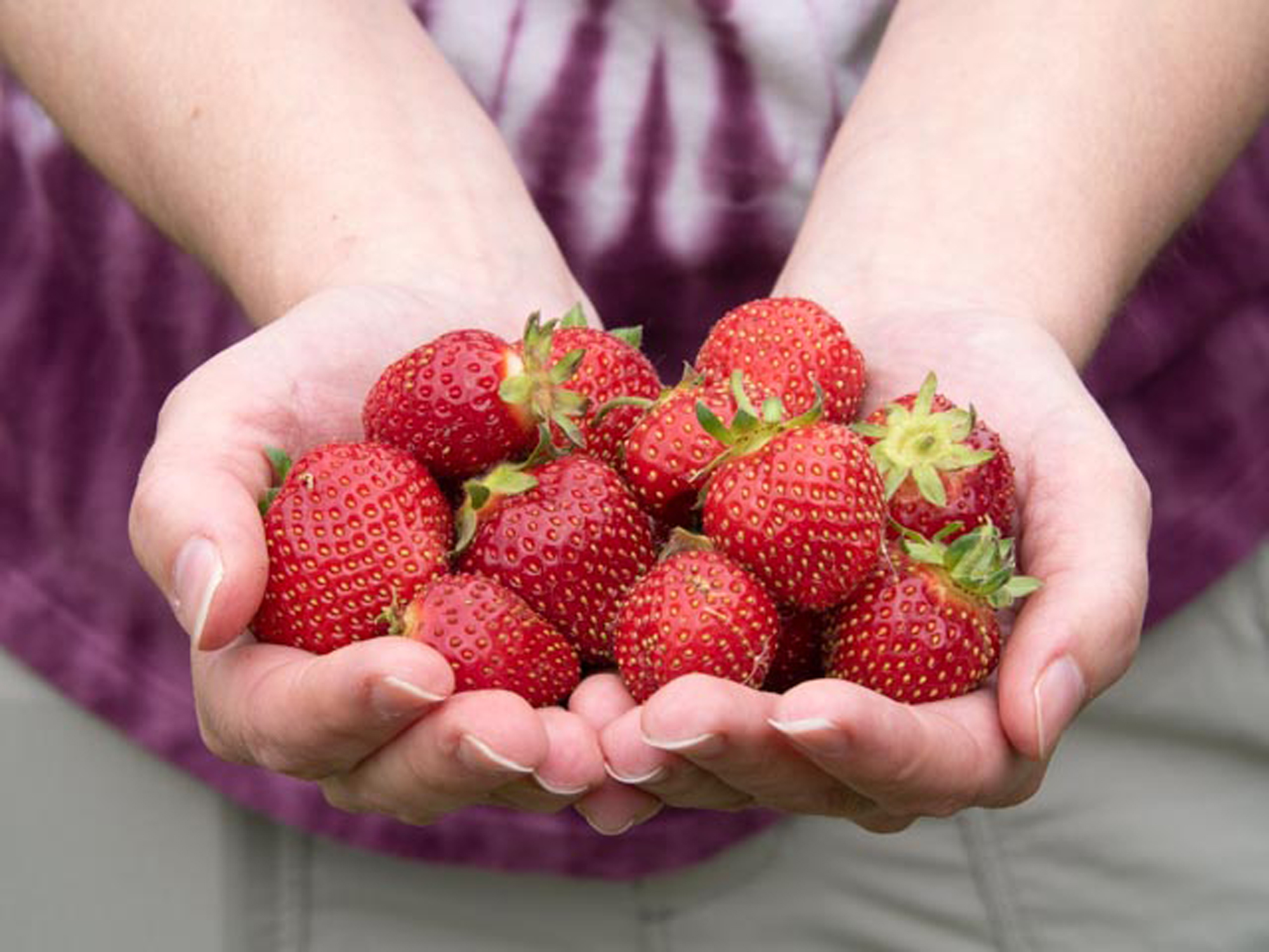 new-york-state-berry-growers-association-how-to-destem-a-strawberry.jpg