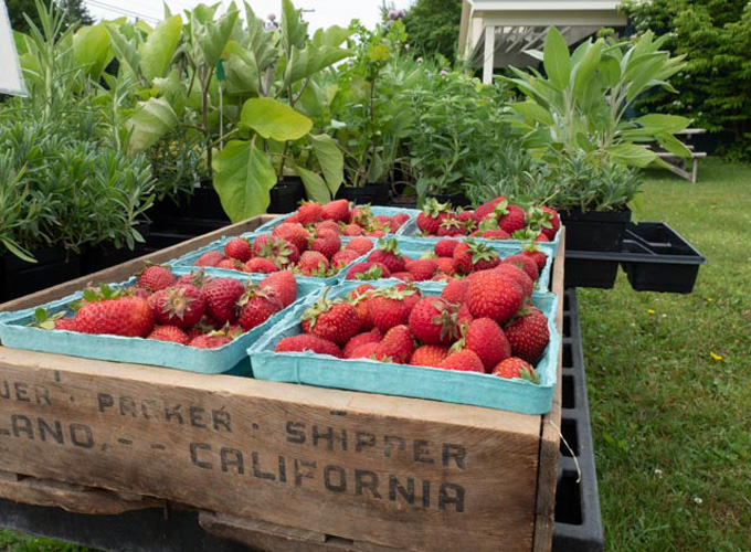 New York State Berry Growers association berry pricing survey.jpg