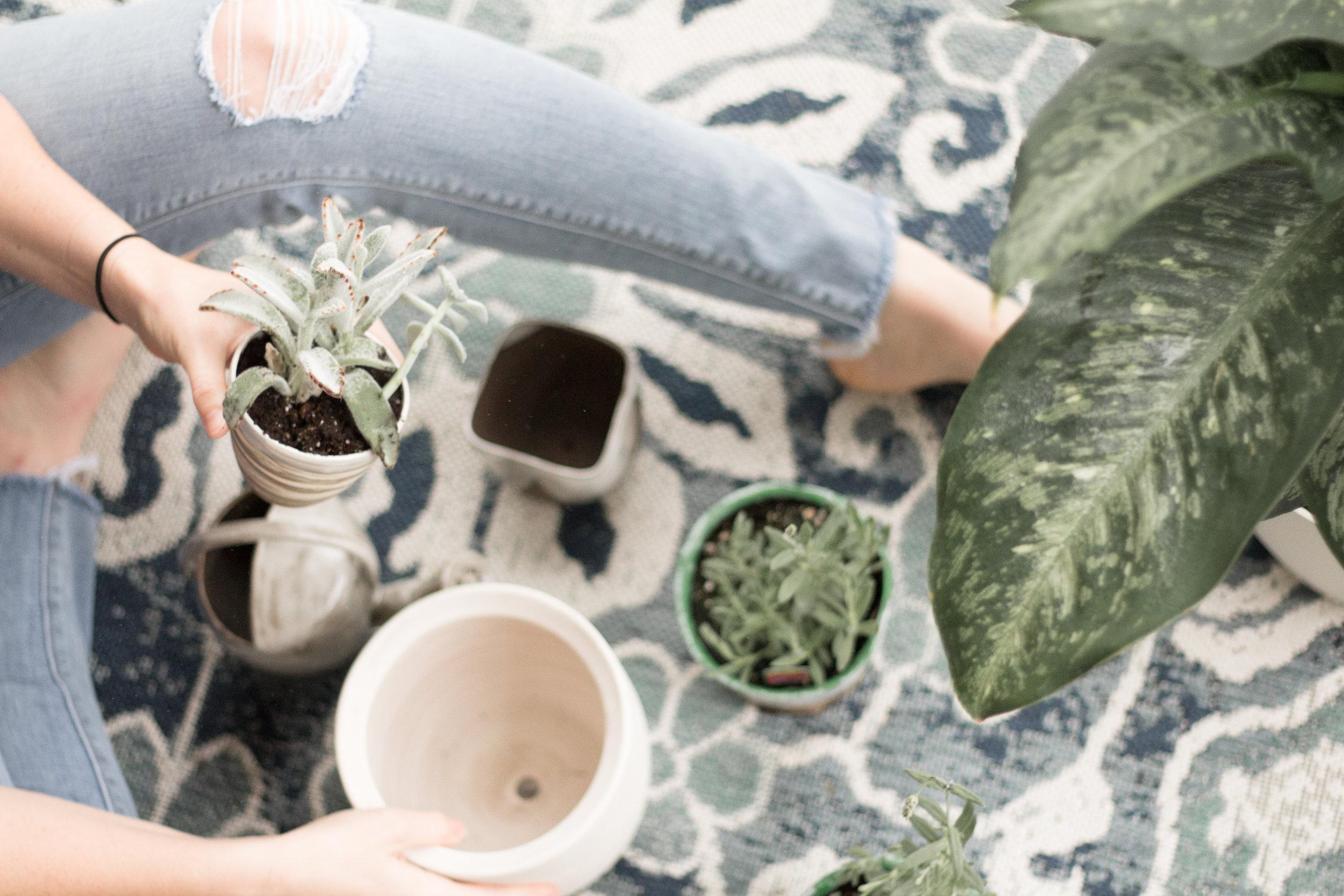 Plants (13 of 1).jpg