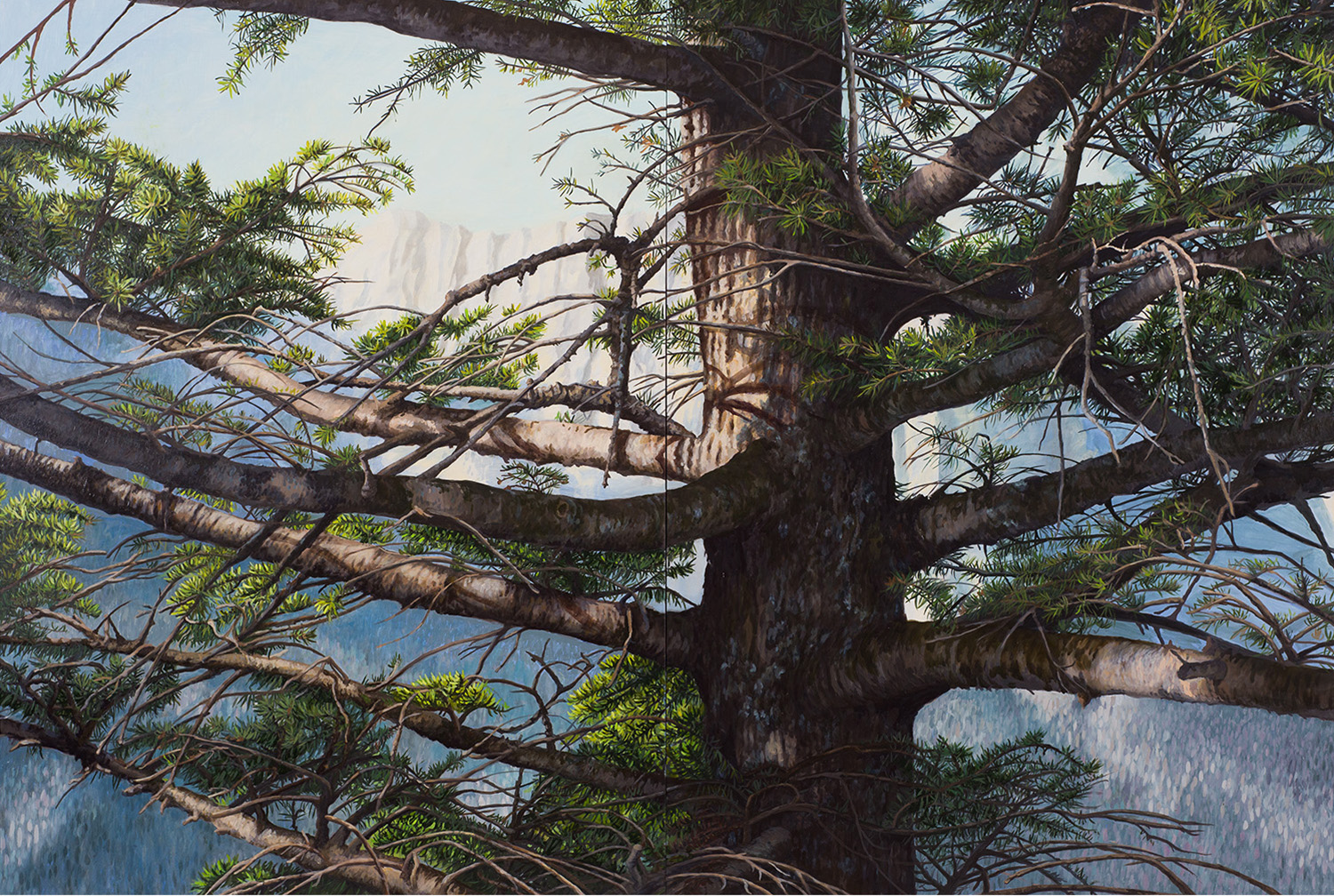 "White Pine Montana: Oil on panel 40"" x 60"" 2013"