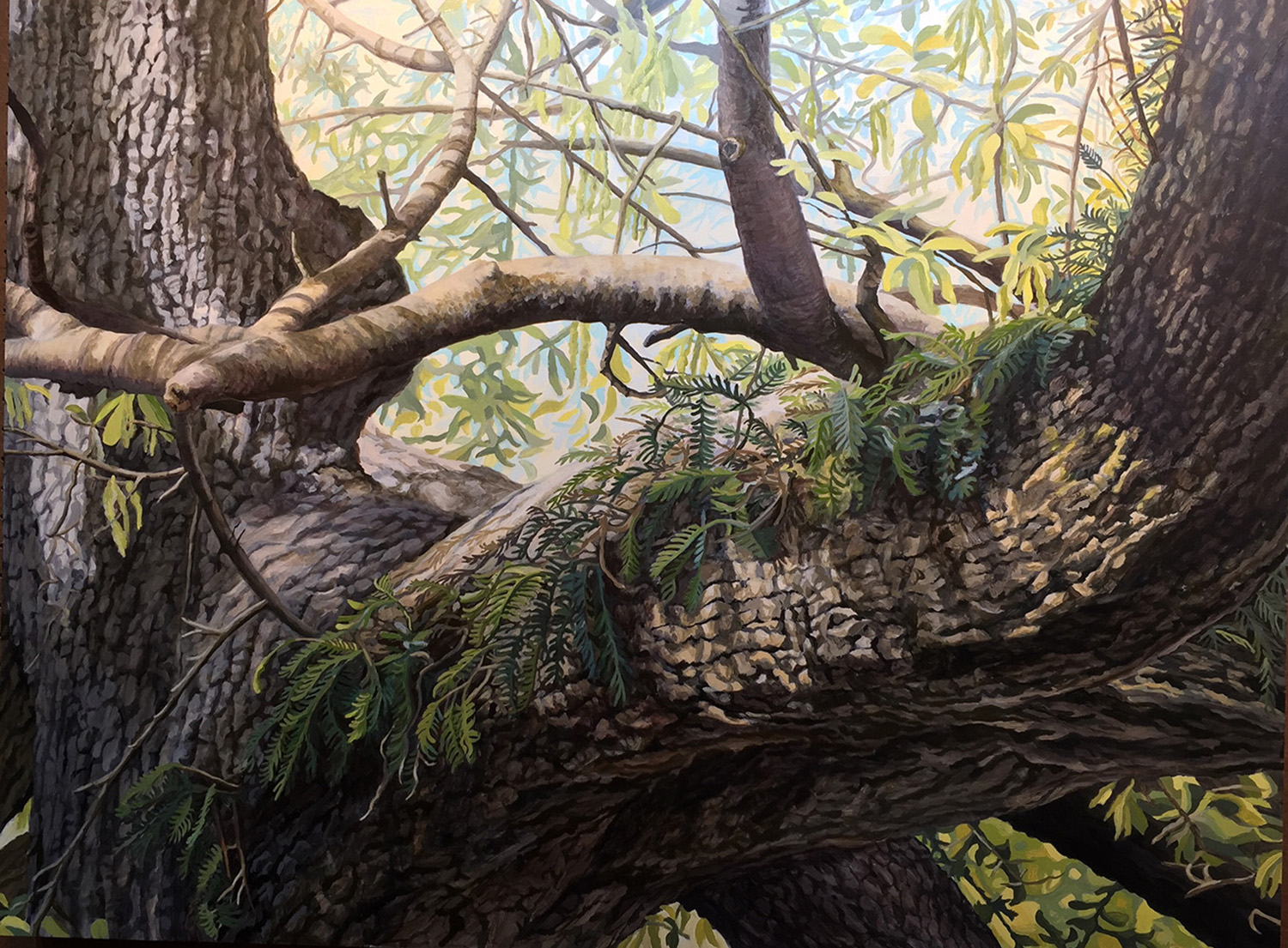 "Live Oak #2: Oil on panel 30"" x 40"" 2015"