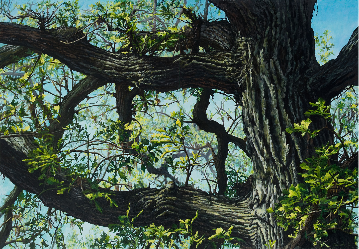"Burr Oak Series: #3: Oil on linen canvas over panel  42"" x 60"" 2010"