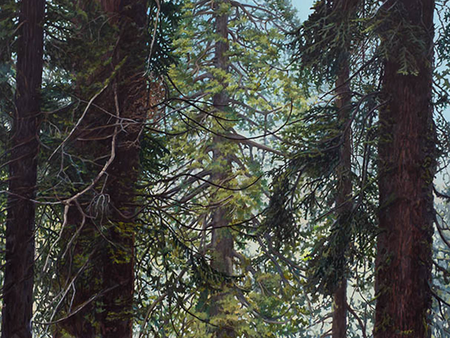 "Sequoia Series #1: Oil on panel 30"" x 40"" 2013"