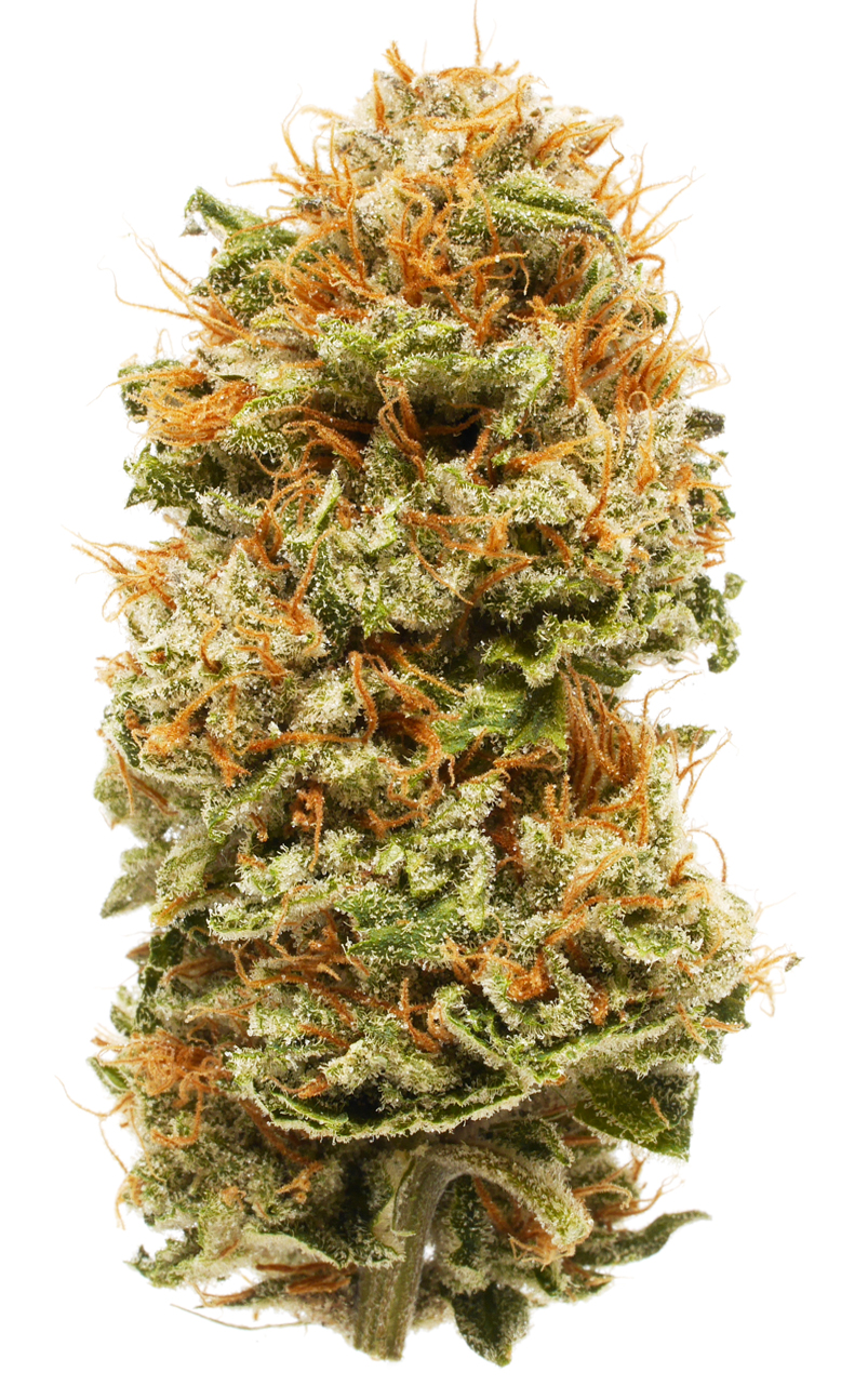 Chemdawg Sour