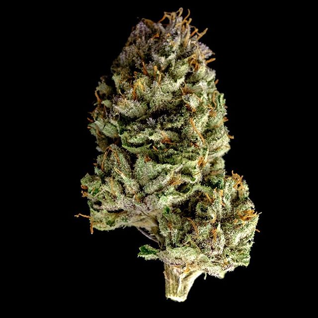 Blackberry Kush . . #weed #nugporn #420 #weedporn #highlife #seattle #tmt #girlswhosmoke #smoke #instaweed #ganja #maryjane #kush #dab #dablife #hightimes #blunt #stoner #blaze #toke #bud #cannabis #potd #wcw #legalize #dank #mmj #munchies #joint #toke #stoned  WARNING: This product has intoxicating effects and may be habit forming. Smoking is hazardous to your health and there may be health risks associated with consumption of this product. This product should not be used by women that are pregnant or breastfeeding. For use by adults 21 years or older. Keep out of reach of children  Tags  Weed maps, hightimes, weed.bae, weed.photography, thekushqueens, marijuana, bongbeauties, wickedgirls, dankdabbergirls, edmgirls, weshouldsmoke, dopemagazine