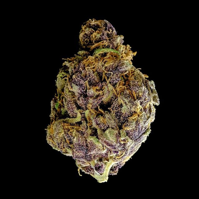 UW Purp . . #weed #nugporn #420 #weedporn #highlife #seattle #tmt #girlswhosmoke #smoke #instaweed #ganja #maryjane #kush #dab #dablife #hightimes #blunt #stoner #blaze #toke #bud #cannabis #potd #wcw #legalize #dank #mmj #munchies #joint #toke #stoned  WARNING: This product has intoxicating effects and may be habit forming. Smoking is hazardous to your health and there may be health risks associated with consumption of this product. This product should not be used by women that are pregnant or breastfeeding. For use by adults 21 years or older. Keep out of reach of children  Tags  Weed maps, hightimes, weed.bae, weed.photography, thekushqueens, marijuana, bongbeauties, wickedgirls, dankdabbergirls, edmgirls, weshouldsmoke, dopemagazine