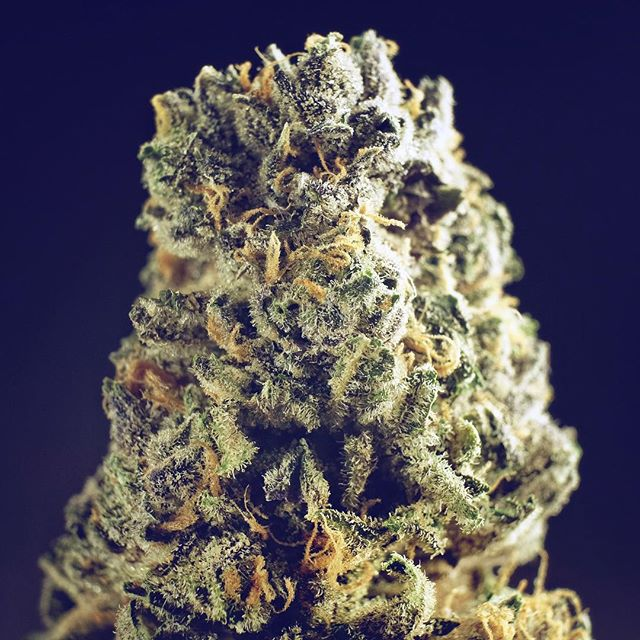Querkle. This heavy hitting indica by TGA will not disappoint