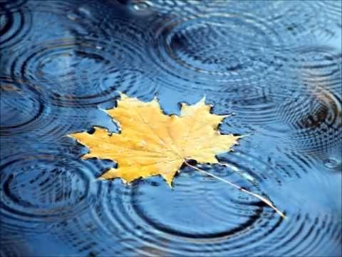 rain and leaf.jpg