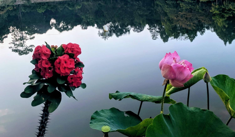 Original Photography: Vassa Retreat at Wat Na Luang, Thailand