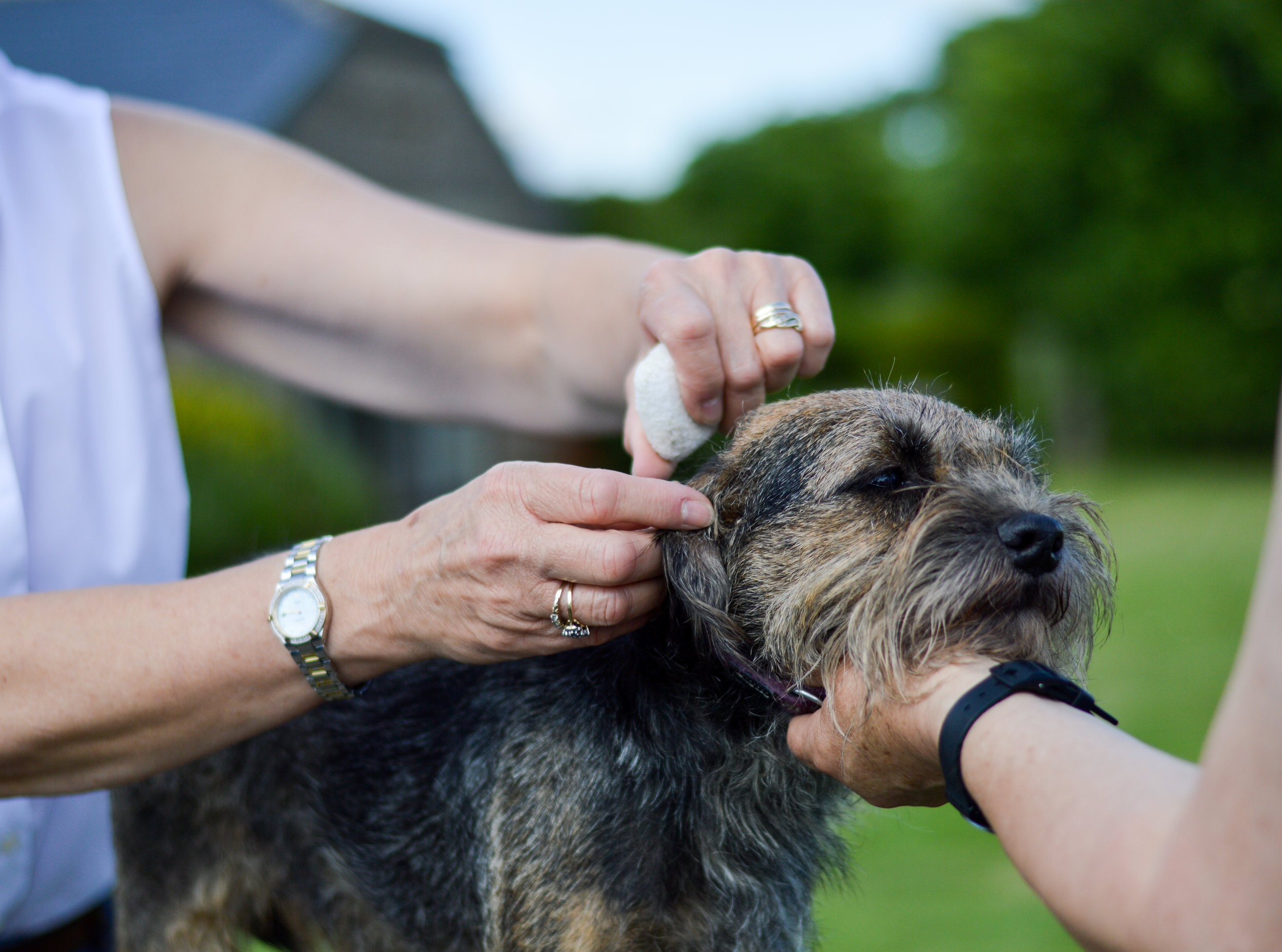Grooming - A great asset to Fern Farm Canine Country Club allowing your pet to have a groom during their stay or freshen up before going home