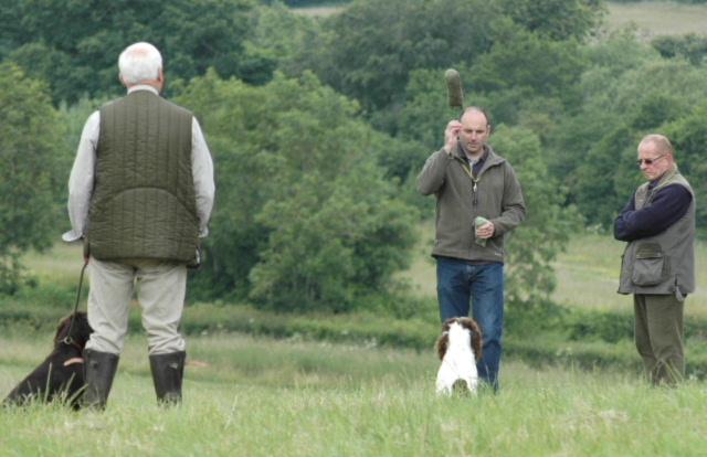Gundog and Obedience Training -