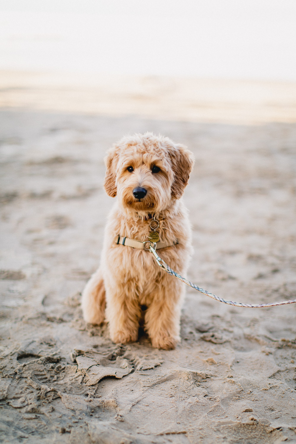 Pismo-Beach-Couples-Photography-Session-With-Puppy-100.jpg
