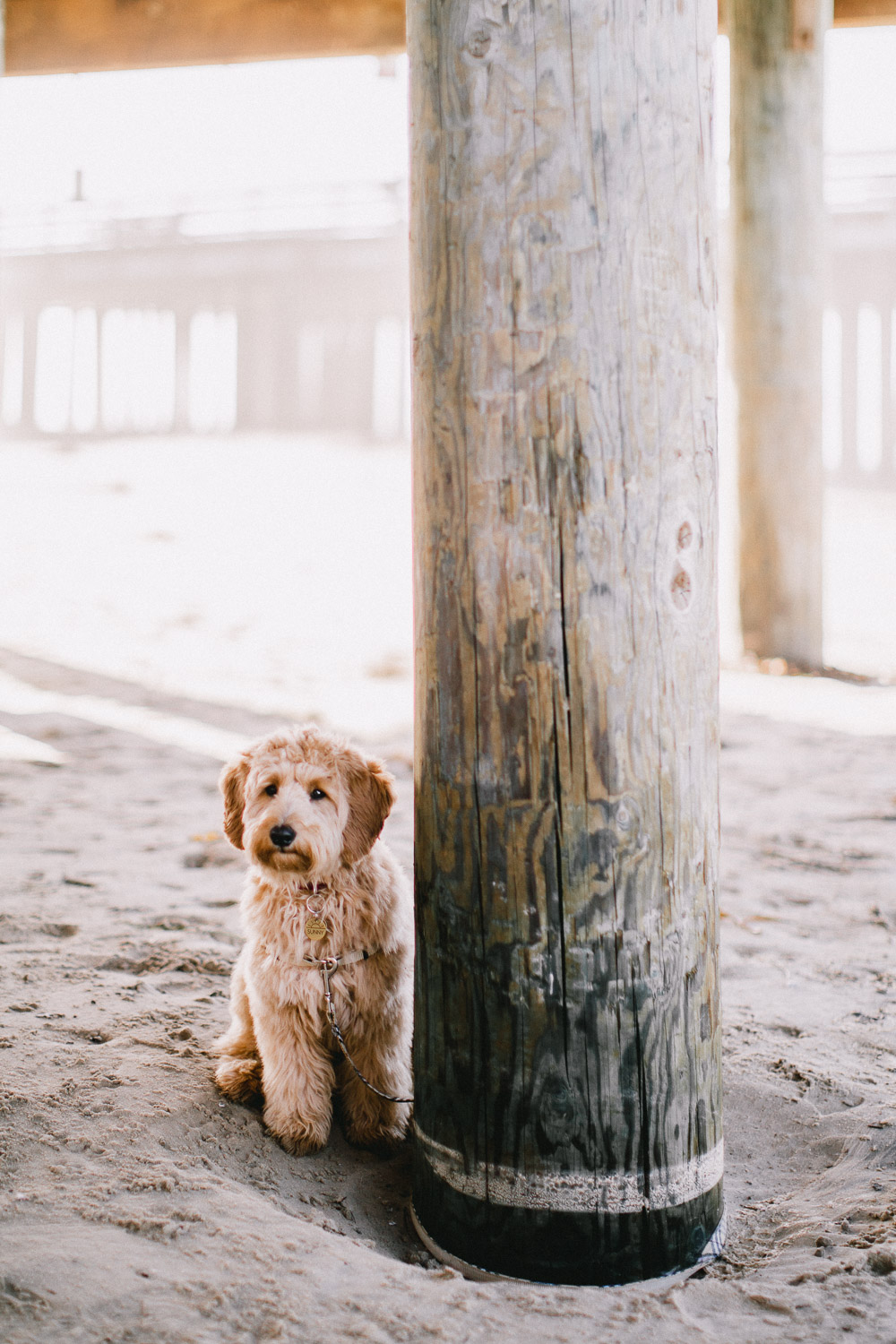 Pismo-Beach-Couples-Photography-Session-With-Puppy-113.jpg