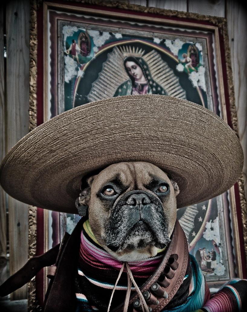Viva El Mayor -