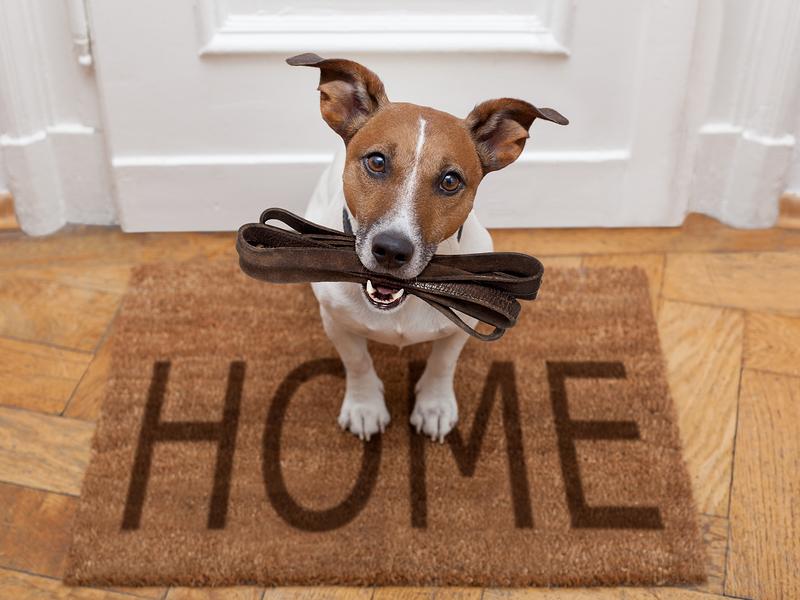 home_staging_tips_huisdieren