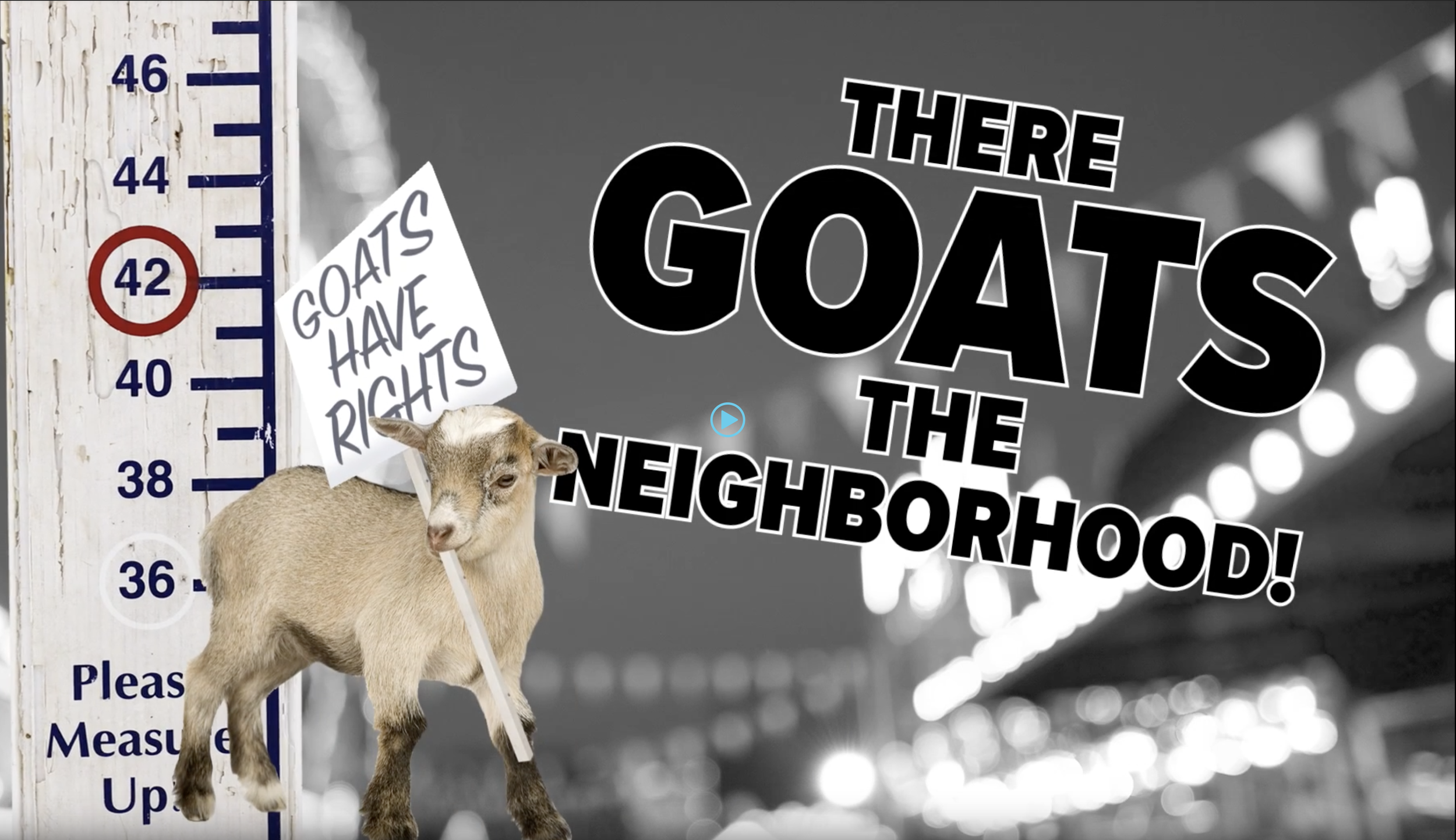 NMSF_RealNews_Goats_play.png