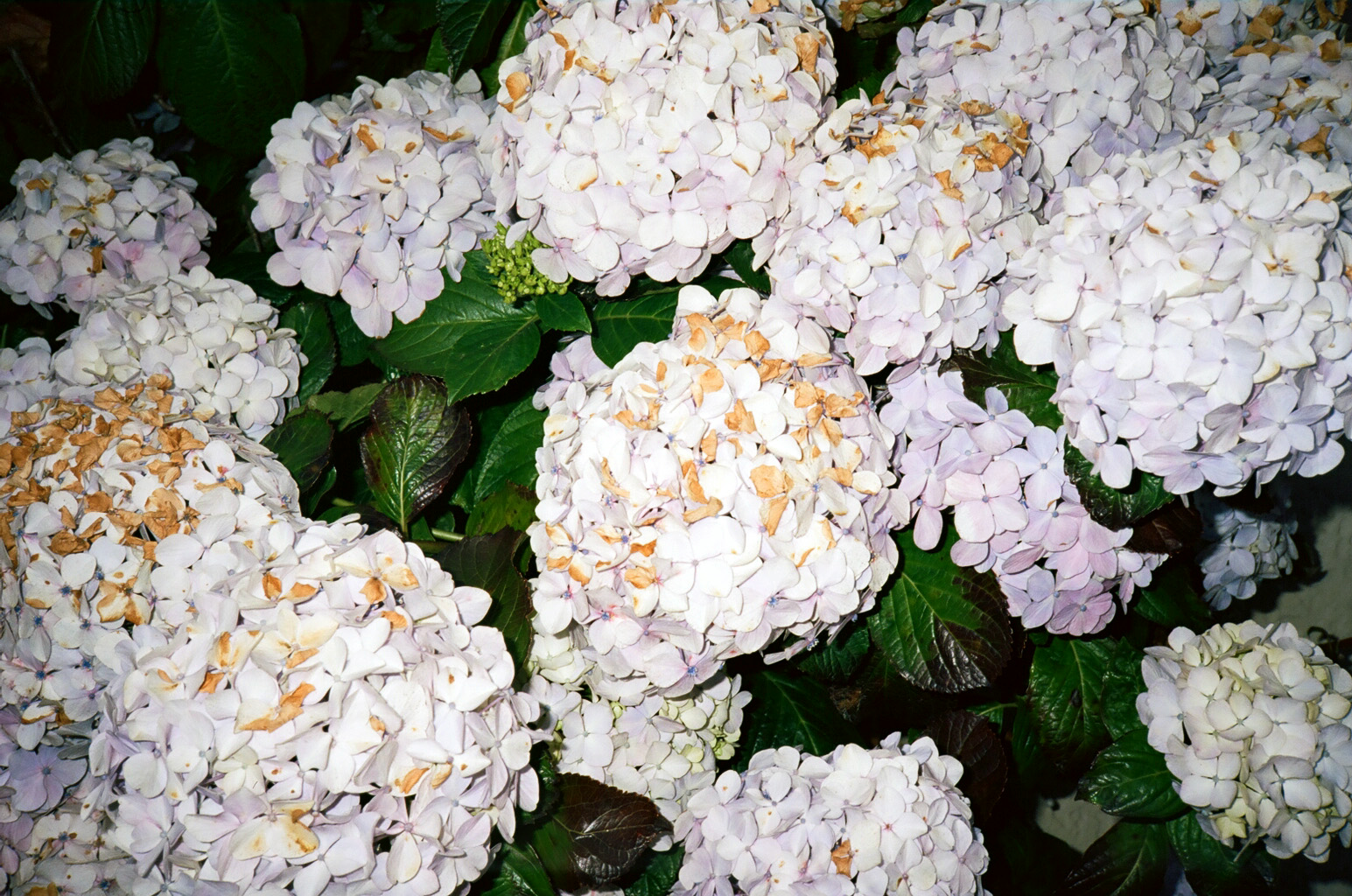 Puffy Flowers