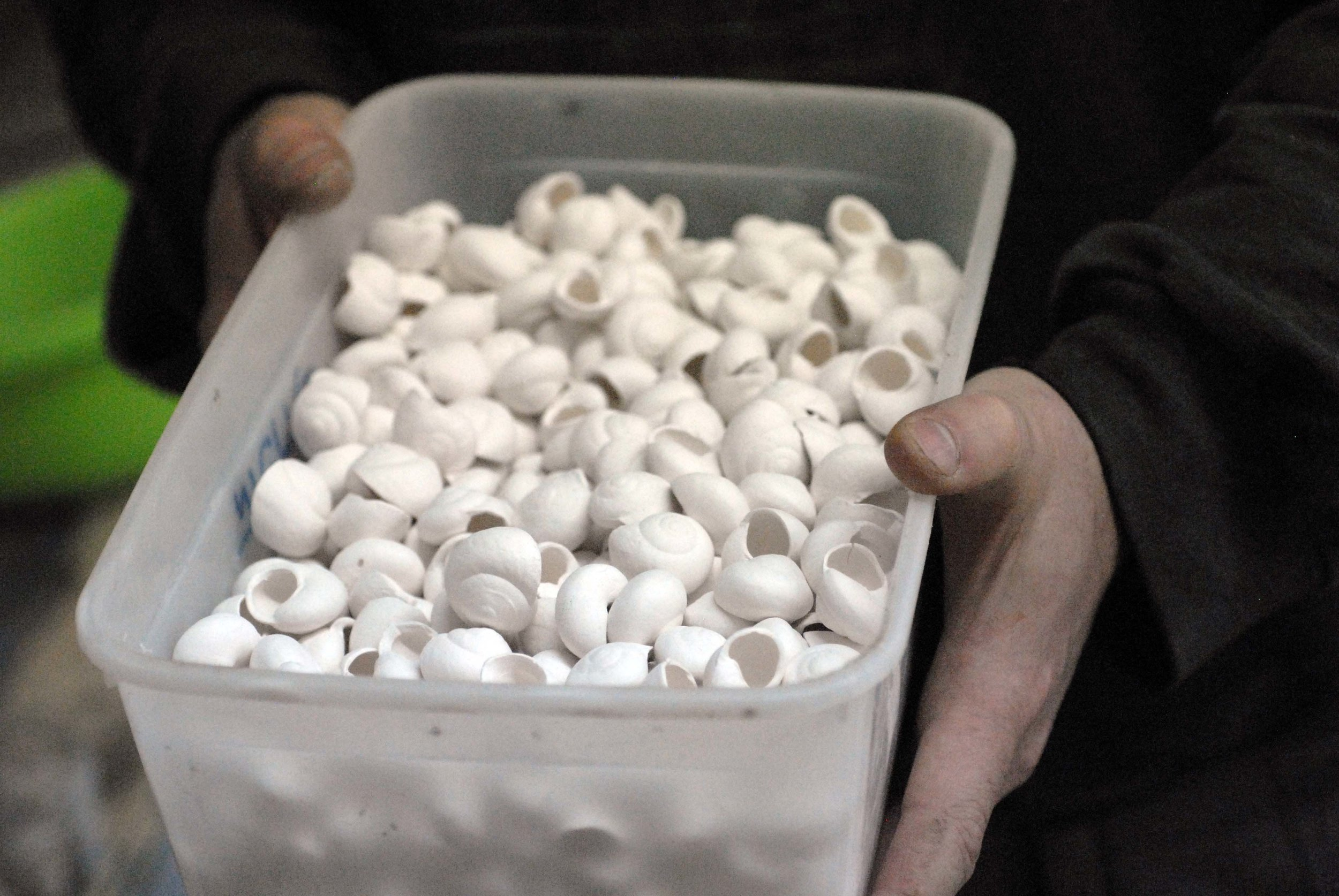 Porcelain snails before being hand-painted, fired, glazed, and fired again by the artist. Photo: Katia Rabey