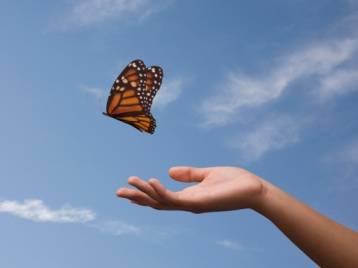 gi-letting-go-butterfly.jpg