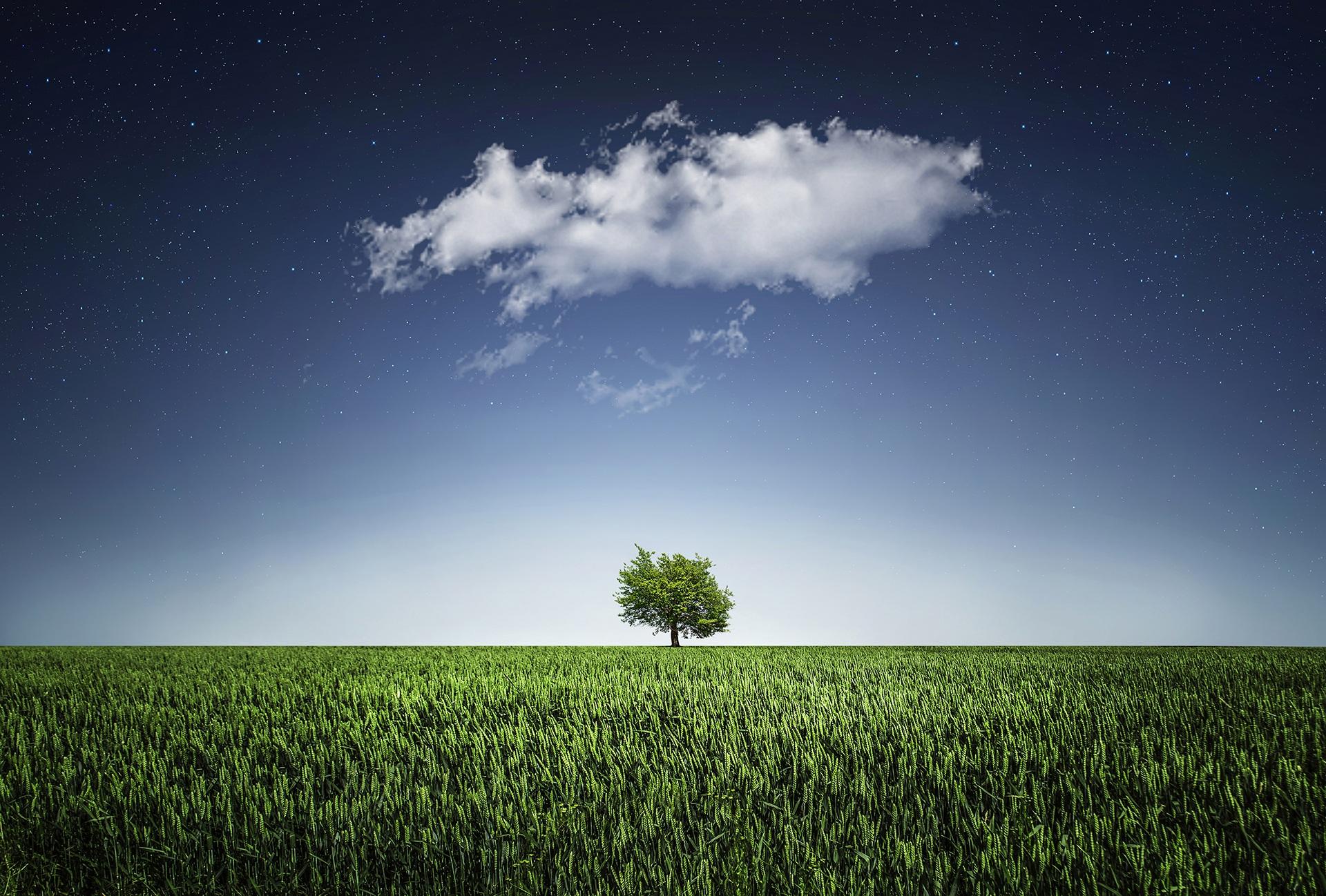 tree solo.jpg