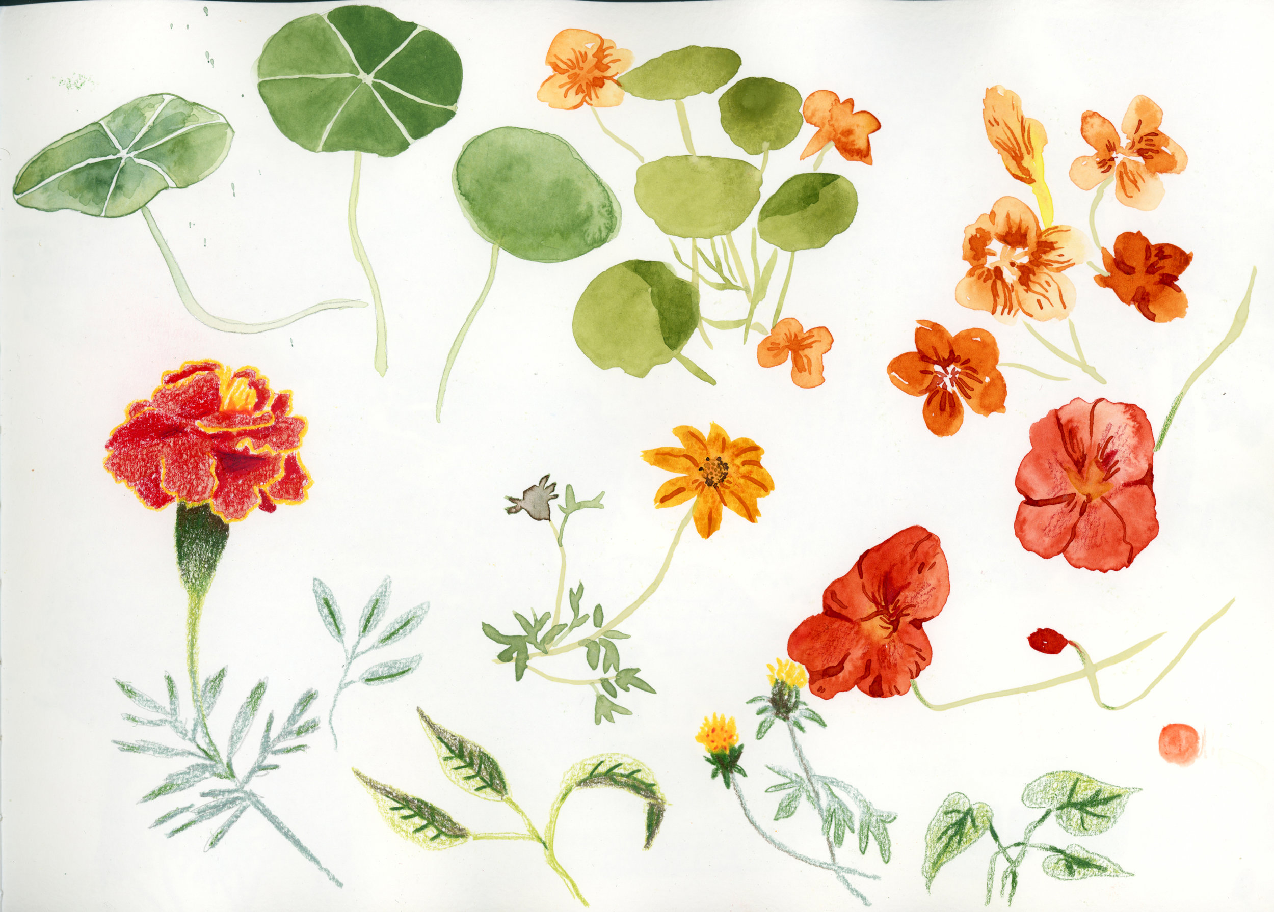 flowers-plants.jpg