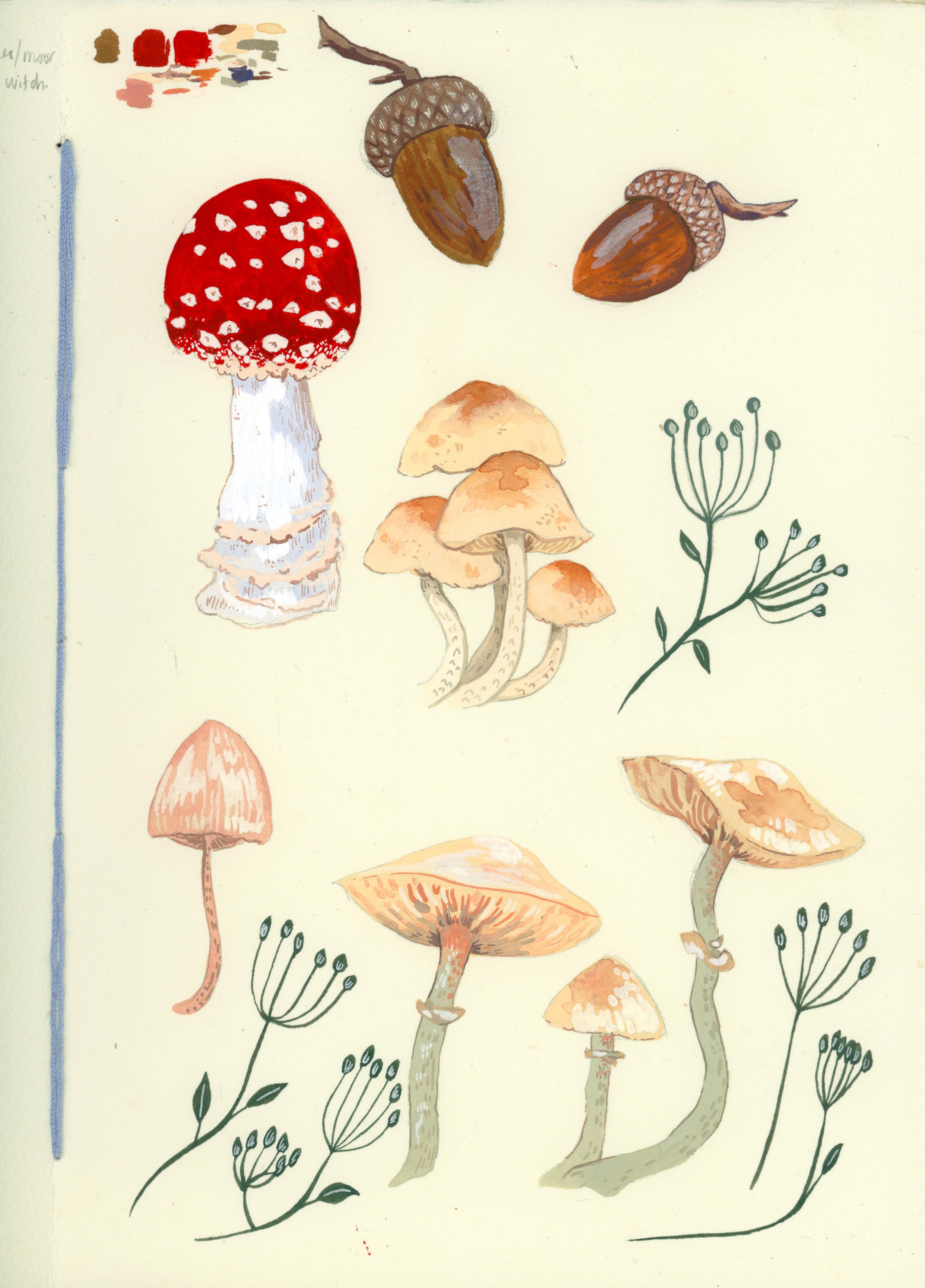 mushroom-sketchbook.jpg