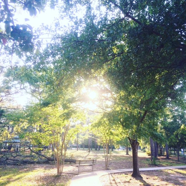 sun through tress.JPG