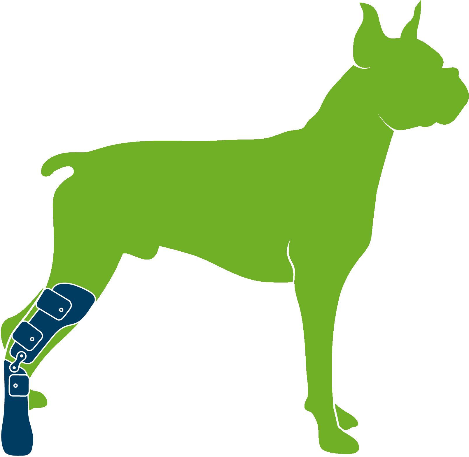 Dog wearing custom hindlimb prosthesis