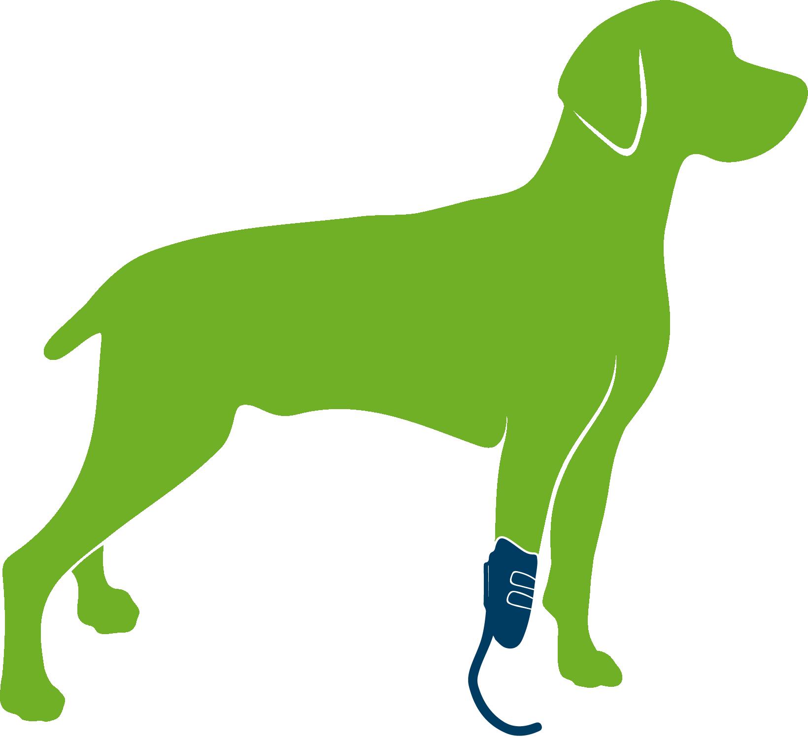 Dog wearing custom forelimb prosthesis