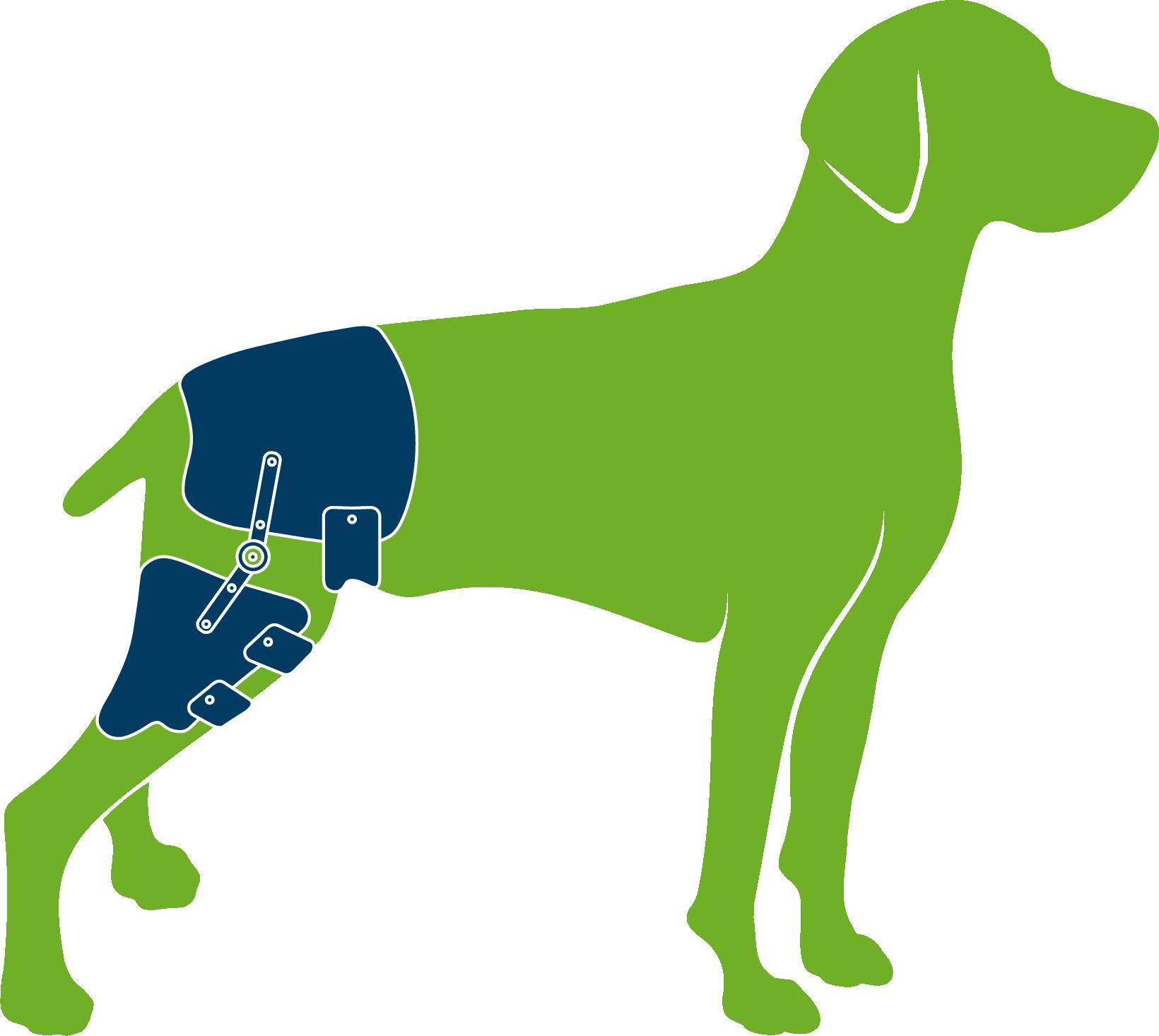Dog with custom hip orthosis