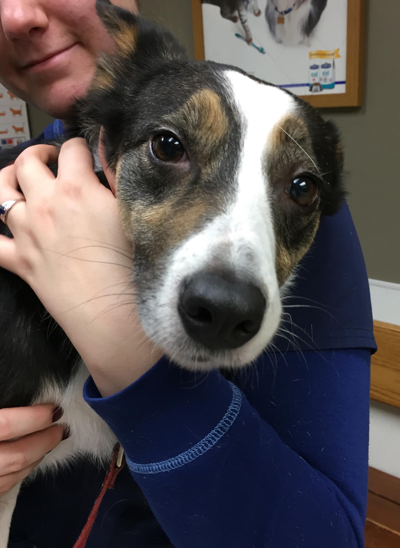 Dog Canine CCL ACL Knee Brace Casting