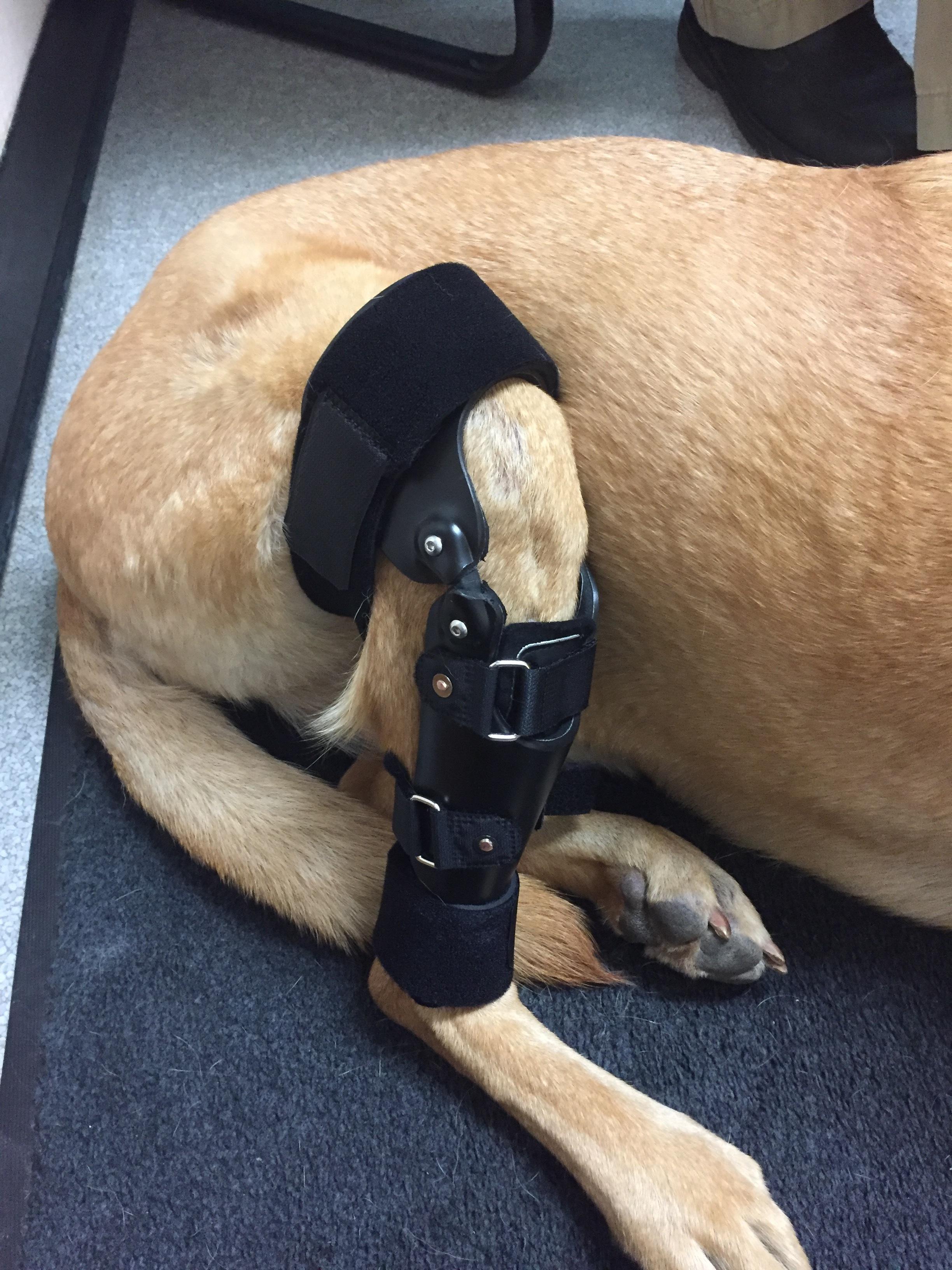Dog Canine CCL ACL Knee Brace