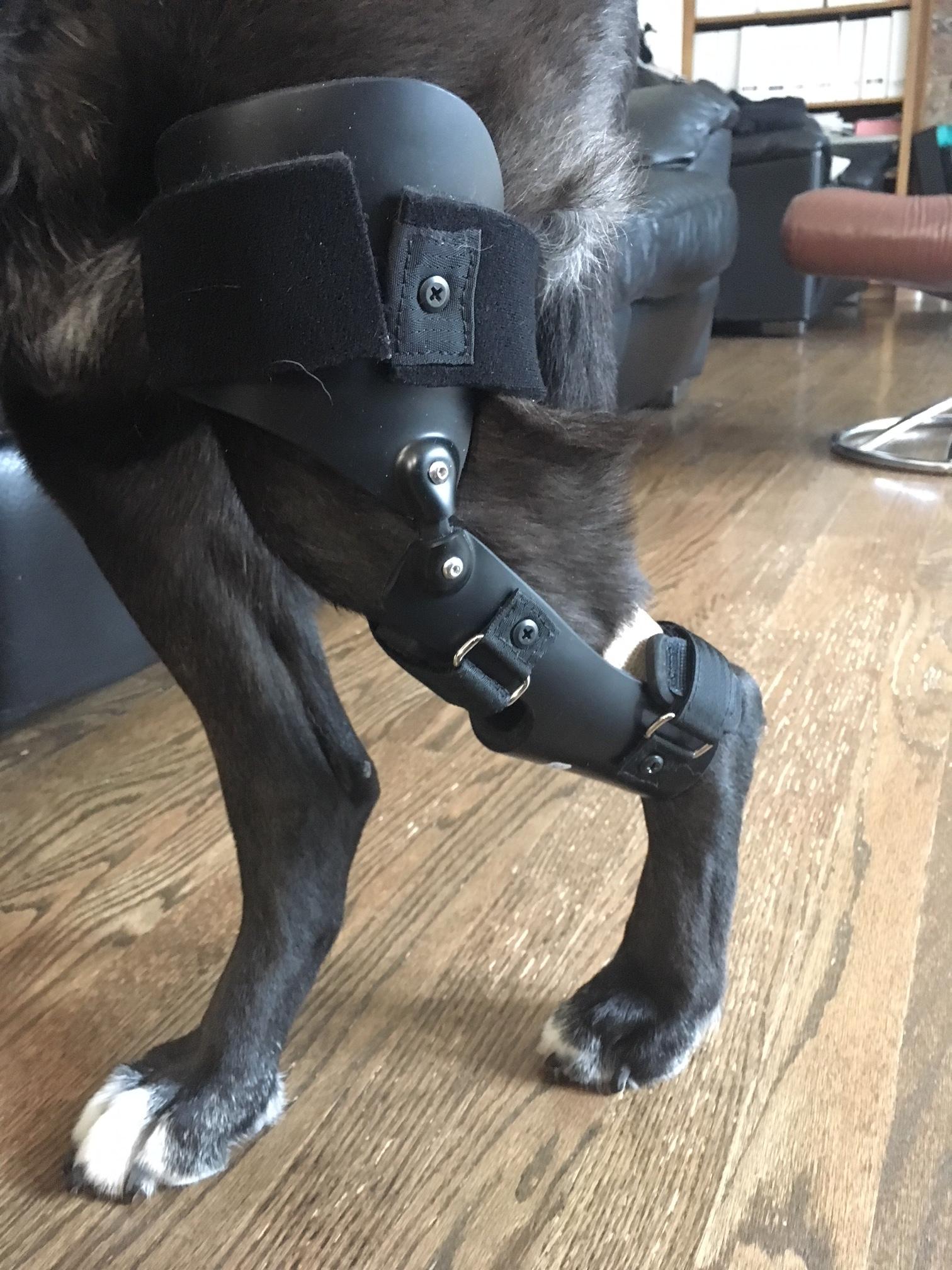 Canine CCL/Stifle Brace