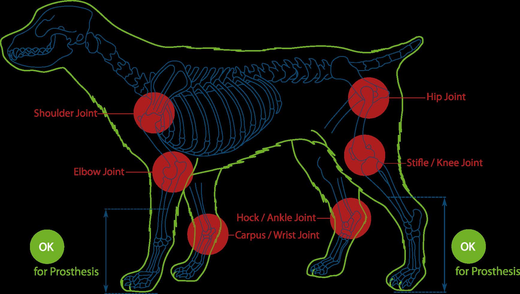 Dog Amputation