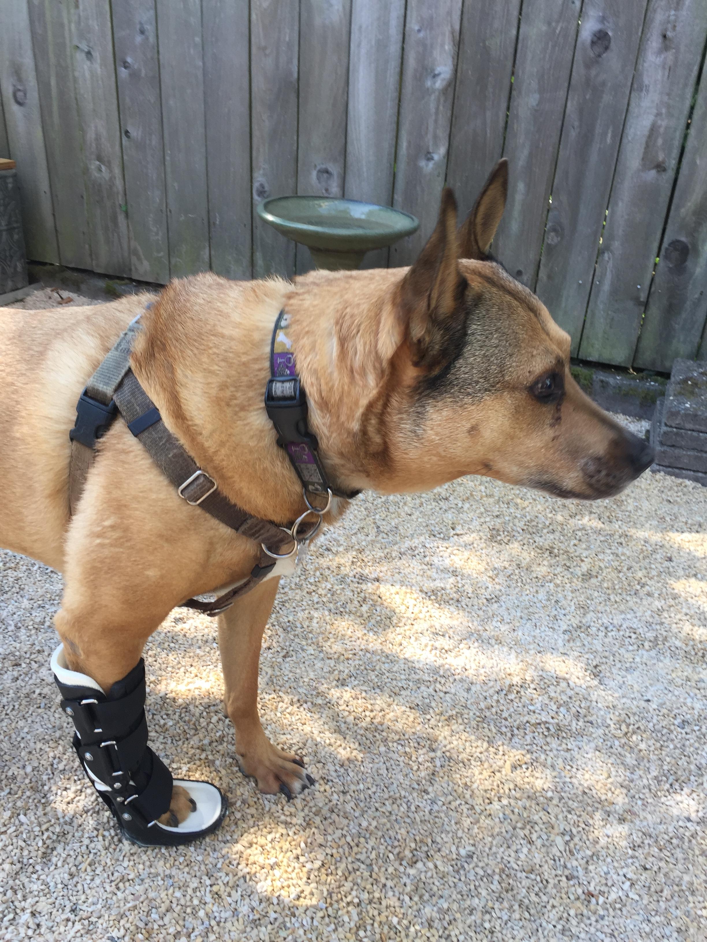 Dog Carpal Hyperextension Brace